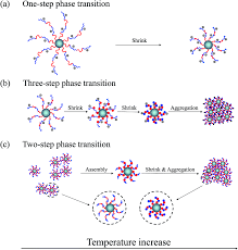 ph modulated double lcst behaviors with diverse aggregation