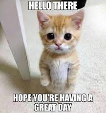 Have A Good Day Meme - hello there hope you re having a great day meme kitten timesheet