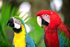 Papağan Hakkında Bilgiler