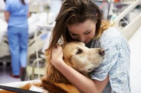Comfort Pet Certification Service Dog Training And Therapy Dog Certification Dallas Houston