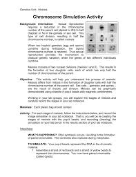 bench the biology place lab bench mitosis and meiosis virtual