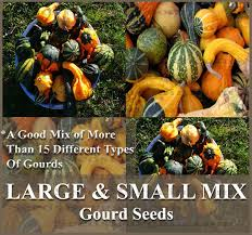 large small mix gourds seeds more than 15 different types