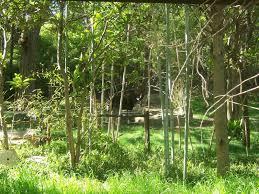 Dallas Zoo Map by Rain Forest Habitat Okapis Zoochat