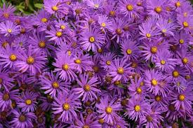 Flowers Of The Month List - the month of september 2017 holidays fun facts folklore the