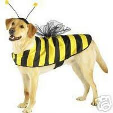 Bumble Bee Halloween Costume Casual Canine Bumble Bee Dog Halloween Costume Xs Xl Ebay
