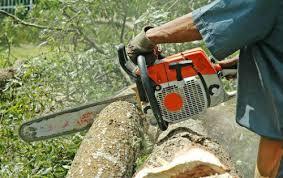 tree cutting felling tips cutting a tree