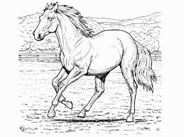 sensational horse coloring book pages horse coloring pictures