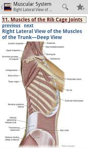 Picture Of Human Knee Muscles Amazon Com The Muscular System Manual The Skeletal Muscles Of
