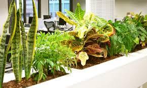 les meilleures plantes de bureau la pause jardin