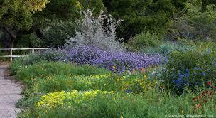 native border plants santa barbara botanic garden photobotanic