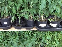 june gardening tips for austin tarrytown austin living
