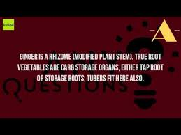 Is Ginger Root A Vegetable - is ginger is a stem youtube