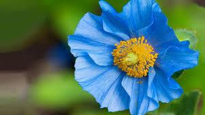 blue flower beautiful blue flower 14086 1920x1080 px hdwallsource