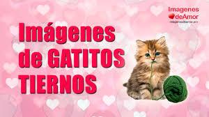 imagenes con frases de amor super tiernas 8 imágenes de gatitos tiernos con lindas frases de amor youtube
