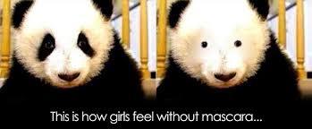 Panda Mascara Meme - panda without mascara