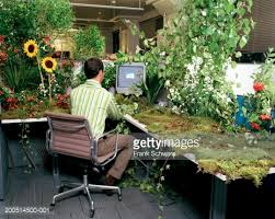 Desk Plant Office Worker At Desk Covered In Plants While Next Desk Has Small
