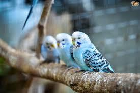 keeping british birds pets4homes