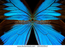 abstract pattern butterfly blue abstract pattern wings butterfly ulysses stock photo royalty