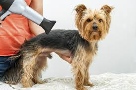grooming tip category animal behavior college