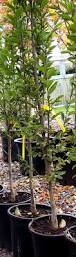 wildtype native plant nursery nurseries u2013 page 2 u2013 the garden professors