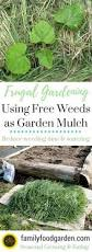 What Kind Of Mulch For Vegetable Garden by Best 25 Garden Mulch Ideas On Pinterest Garden Ideas Organic