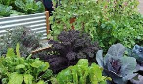 how to start a vegetable garden for beginners home vegetable growing course study vegetable gardening