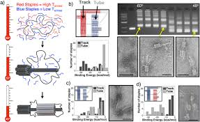 Dna Model Origami - directing folding pathways for multi component dna origami