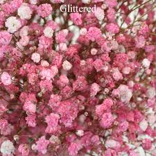 bulk flowers pink baby breath flowers bas breath wholesale bulk flowers
