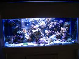 Floating Aquascape Reef2reef Saltwater And Reef Aquarium Forum - black foam reef2reef saltwater and reef aquarium forum
