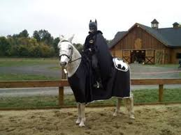 Halloween Costumes Horse 10 Horse Costumes Images Horses Animal