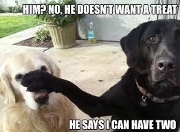 Black Lab Meme - labrador dog meme silly bunt