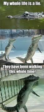 Alligator Memes - 328 best crocodiles and alligators images on pinterest crocodile