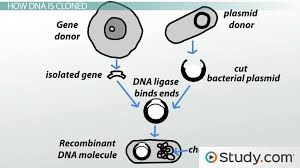 Resume Means In Hindi What Is Genetic Engineering Definition And Examples Video