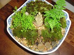 moss garden forest garden