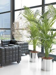 Comfortable Home by Home Design 85 Glamorous Plants For Living Rooms