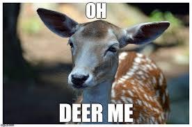 Oh Deer Meme - yo dawg heard you meme imgflip