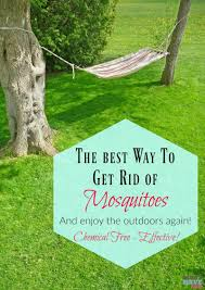 best way to get rid of mosquitoes must have mom