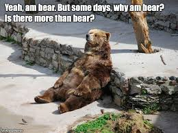 Bear Memes - bear meme weknowmemes