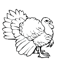 coloring pages turkey outline printable free turkey outline