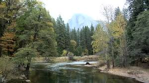 California vegetaion images Mountain stream yosemite national park california usa hd jpg