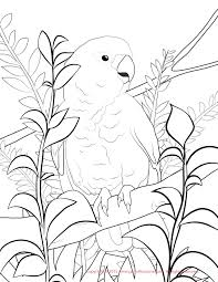 carnation flower ready for print coloring page flowers beautiful