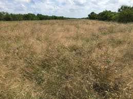 native plants of texas native grasses a reclamation and remediation natural