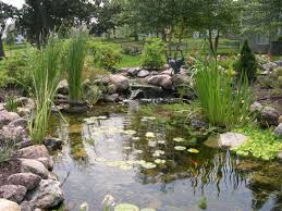 Types Of Fish For Garden Ponds - ecosystem ponds just add water