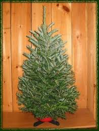 buy a christmas tree online live fraser fir for sale
