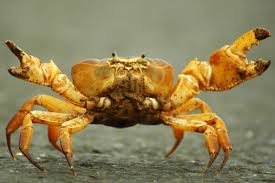 invertebrate pictures spiders snails mantises and more