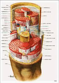 mfr cuisine mfr explained goldeen myofascial release therapy