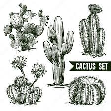 cactus sketch set u2014 stock vector macrovector 79988848