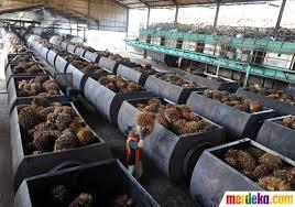 Minyak Kelapa Sawit Terkini foto menengok satu satunya pabrik pengolahan cpo di jawa merdeka