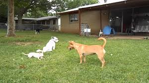 Dog In The Backyard by Summer Day In The Backyard With My Dog Pack Youtube