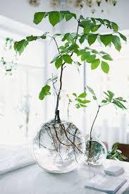 Plants Indoor by Best 20 Botanical Decor Ideas On Pinterest Plants Indoor